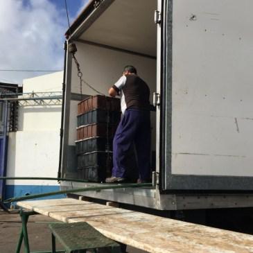 Merluza: renuevan sistema para la devolución y reasignación de cuotas