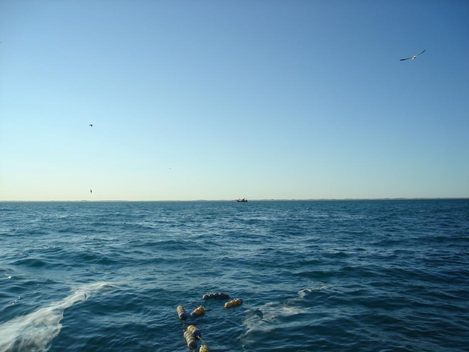 Qué futuro le espera a la industria pesquera