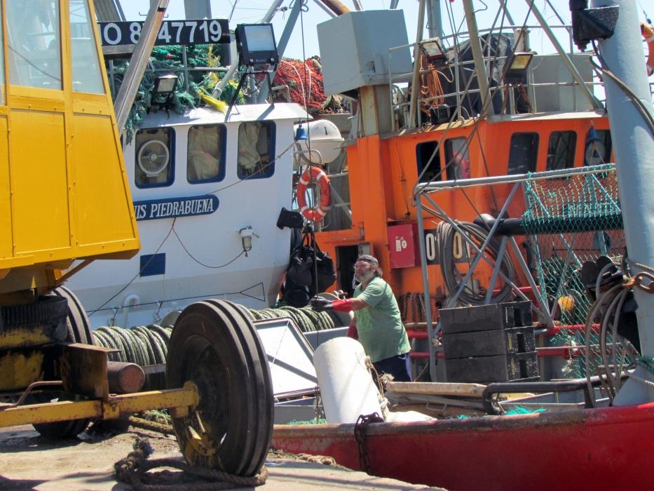 Traccionados por el calamar, crecieron los desembarques durante enero