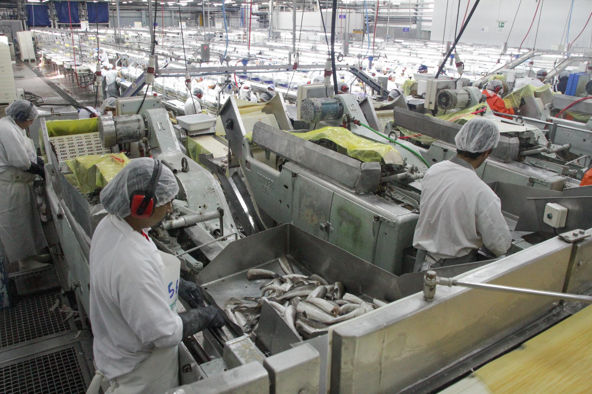 Rusia: Estado de situación establecimientos pesqueros argentinos