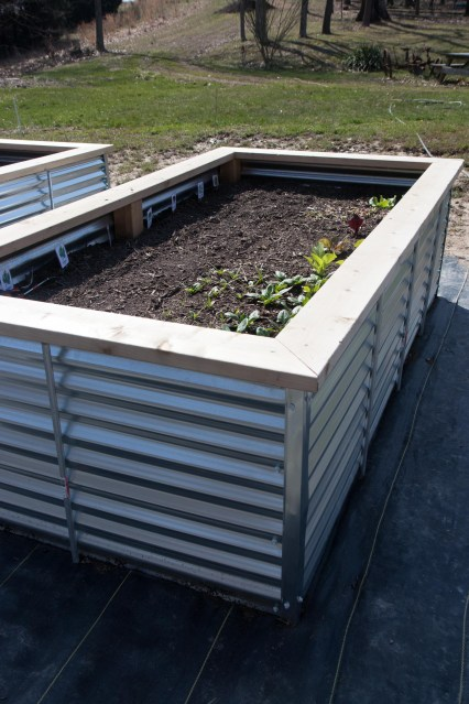 All About Our New Galvanized Steel Raised Beds Wholefully for [keyword