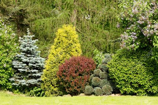 Beautiful Spring Garden Design With Conifer Trees Green Grass for ucwords]