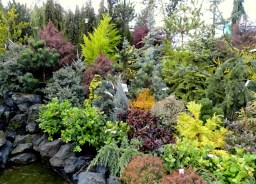 Conifer Garden 15 Free Online Puzzle Games On Bobandsuewilliams pertaining to ucwords]