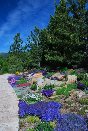 Photo Gallery Betty Ford Alpine Gardens with 28+ How To Plant Up An Alpine Trough