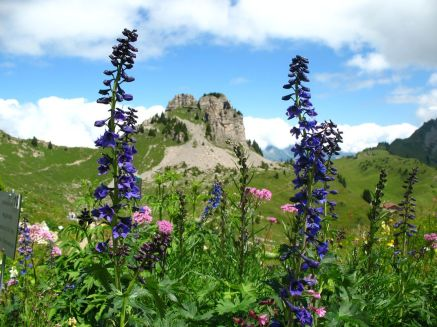 Switzerlands Most Beautiful Alpine Gardens Travel Smithsonian throughout 28+ How To Plant Up An Alpine Trough
