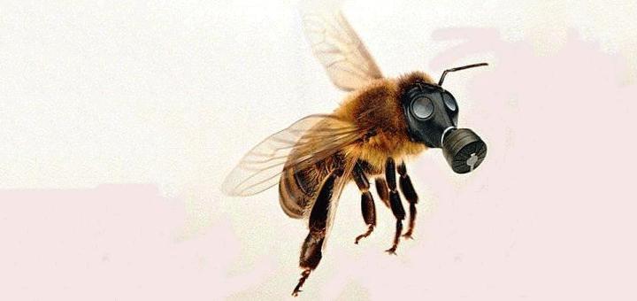 مركبات-النيونيكوتينويد-تهدد-النحل