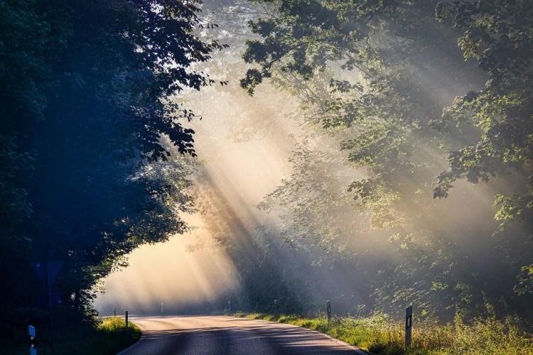 fog, sunbeam, road