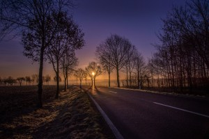 road, sunrise, trees