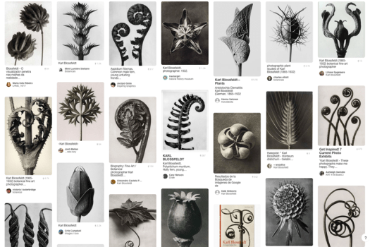 Plant Photographs of Karl Blossfeldt