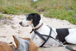 Frida on the beach