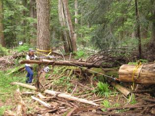 June 2015 - using a tirfor to pull a 1000 lb log through the forest