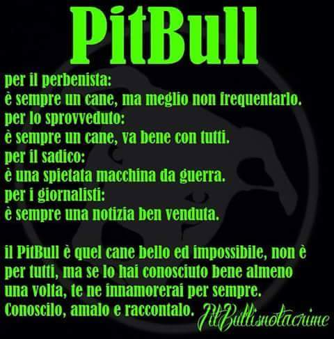 Frasi Sui Cani Pitbull.Pitbull Cerca Frasi Facebook
