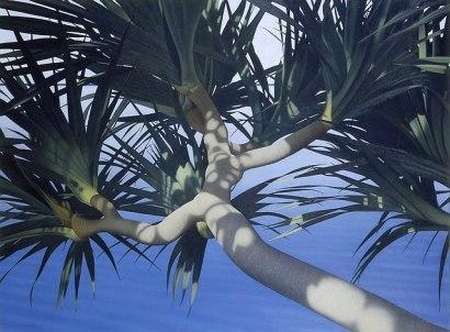 2014-palmier.jpg?fit=640%2C471&ssl=1