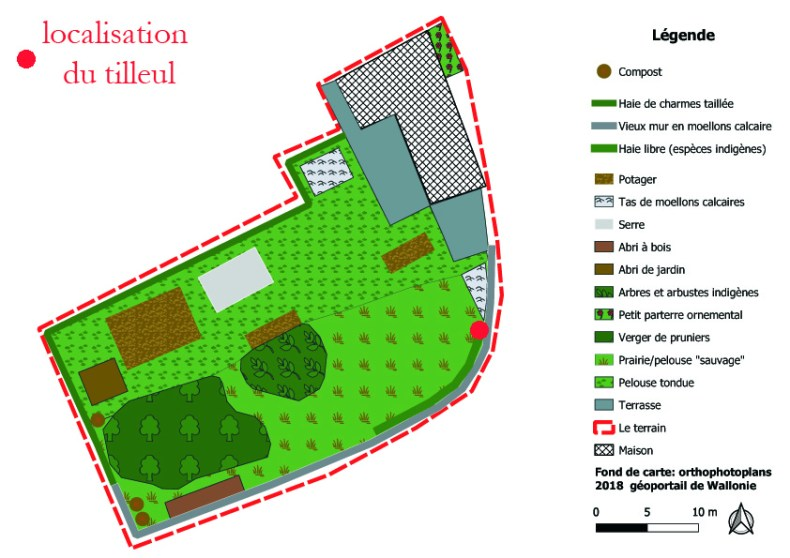 localisation du tilleul dans le jardin