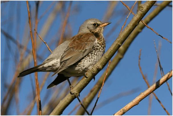 stage ornithologique à Libin en Wallonie