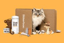 Photo of Litterbox.com Announces Premium Subscription Box Service for Cats