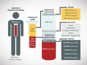 Ilustración de la composición sanguínea en el cuerpo humano.
