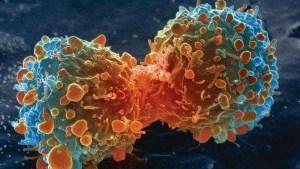 Científicos de la Universidad de Zúrich, han desarrollado una técnica que permite la eliminación de células cancerígenas.
