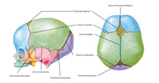 examen fisico neonatal