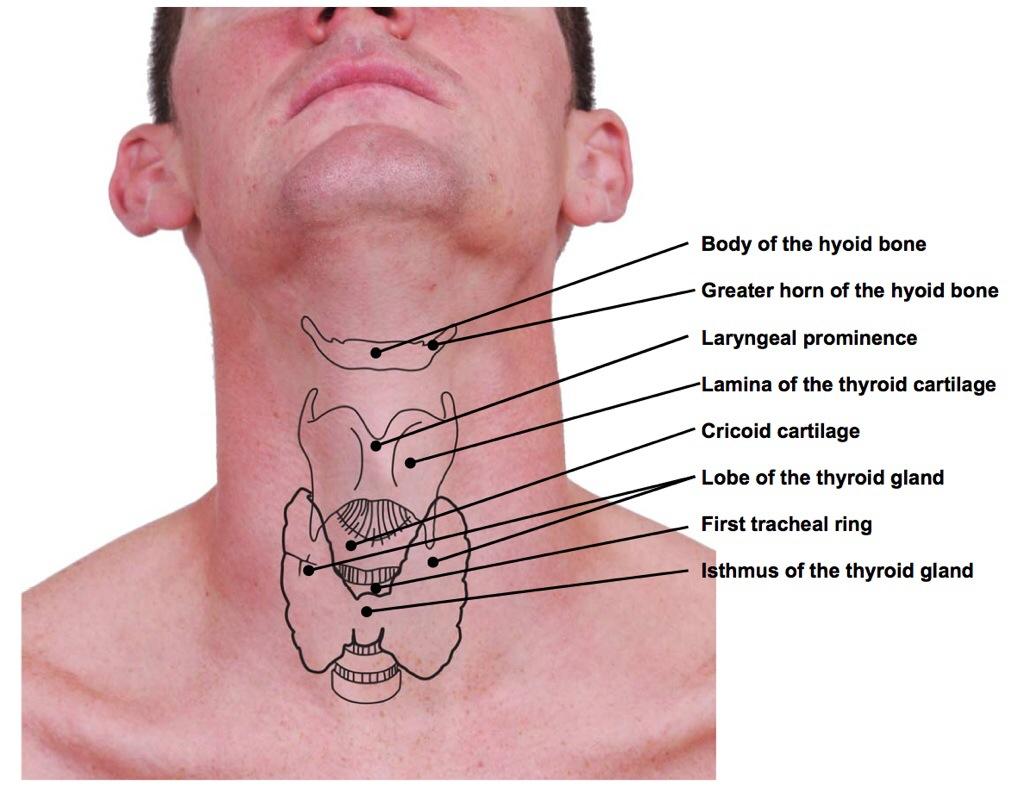 hight resolution of drawn in https cerebrovortex files wordpress com 2014 07 hyoid dr dooley jpg