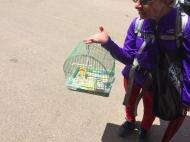På sin pilegrimsferd i Spania møtte idar Gjertsen denne damen som gikk med en kanarifug i bur.