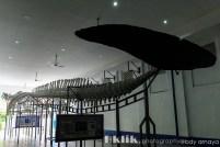Kerangka Hiu di Pintu Keluar Museum Zoologi
