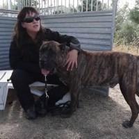 Perros de protección para mujeres maltratadas
