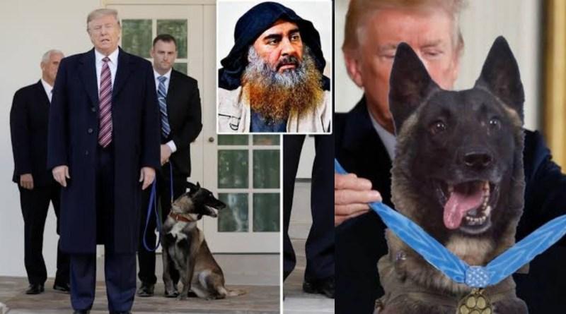 Trump honors Conan the hero dog at white house