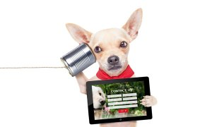 chihuahua service dog is holding a tablet with service dog certification of americas contact form on the screen and a soup can with a line signifying a phone to his ear with his other paw