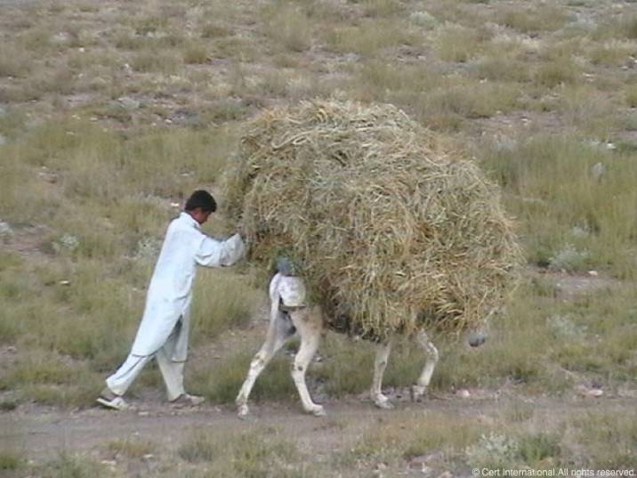 Afghanistan014