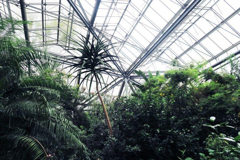 Guia de viaje: Amsterdam, invernadero del Jardín Botánico