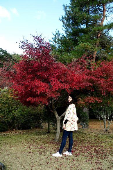 Arces japoneses en el parque Iwatayama en Arashiyama, Kioto, Japón