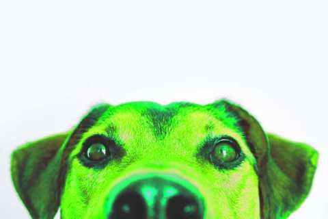 el copywriting del perro verde