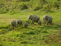 Karpagam Chelliah. Herd arriving at water hole. 2009. Kaziranga.