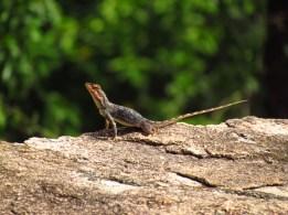 Shreekant Deodhar. Psammophilus dorsalis receptive female. 2012. Rishi Valley.