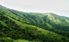 Ashok Kumar Mallik. View of grass land. 2010. Brahmagiri.