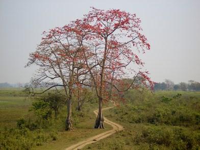 Smita Nair. 2009. Kaziranga.