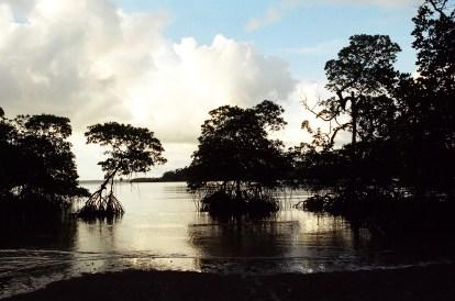S.P. Vijaykumar. Mangroves Pre-Tsunami Wandoor. 2002. S. Andaman.