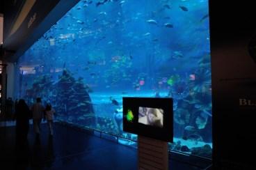 Dubaj | The Dubai Mall