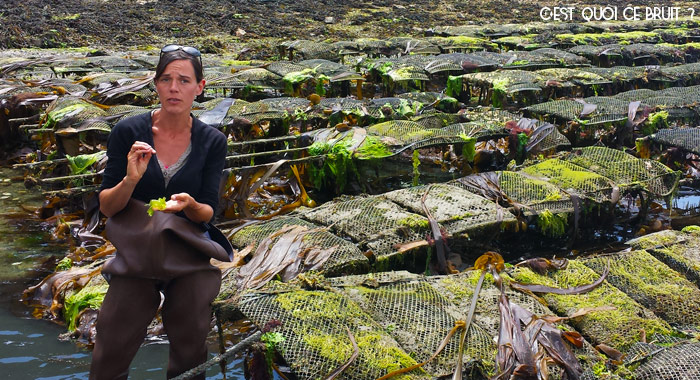 Rencontre dans le Morbihan avec Mélanie Chouan