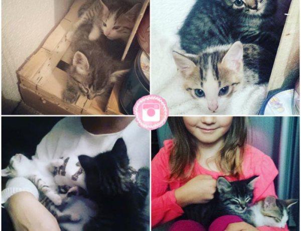 L'arrivée des chatons Tarani et Rasteau