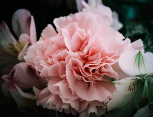5 bonnes raisons d'offrir des fleurs