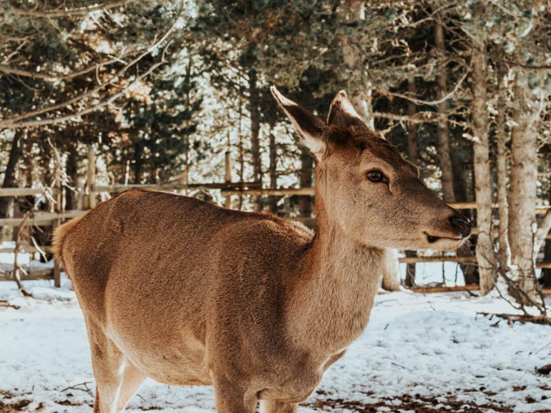 Naturlandia, Parc animalier dans la forêt à Andorre, blogtrip famille 2018