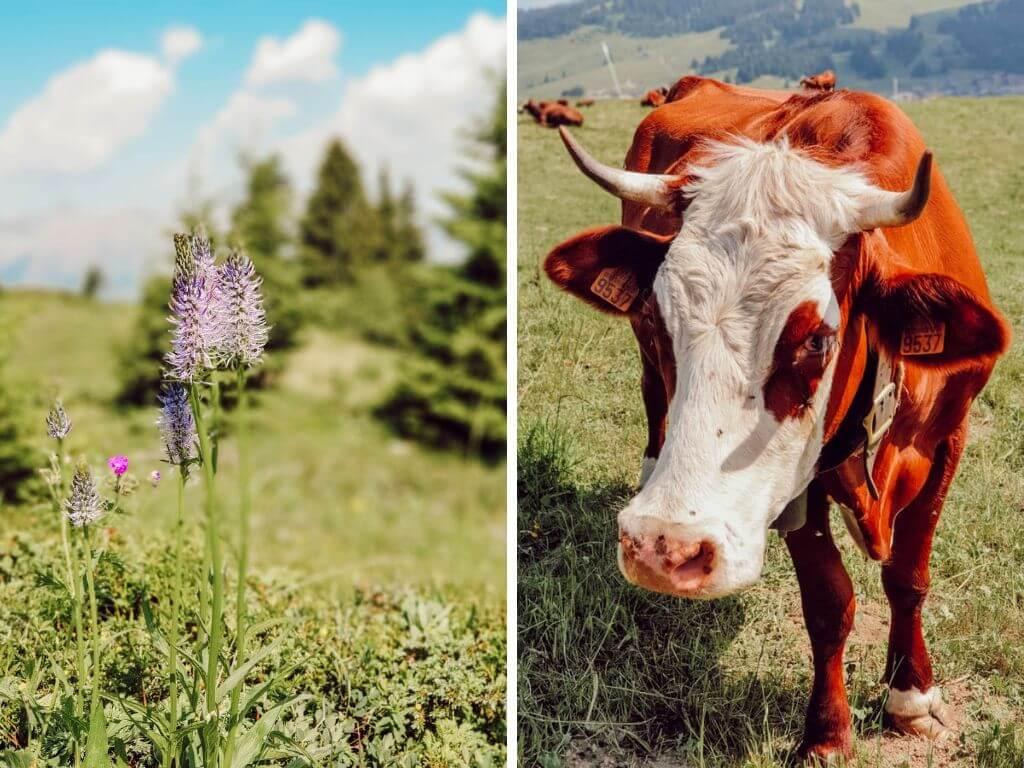 Les Saisies en été : les vacances en famille à la montagne