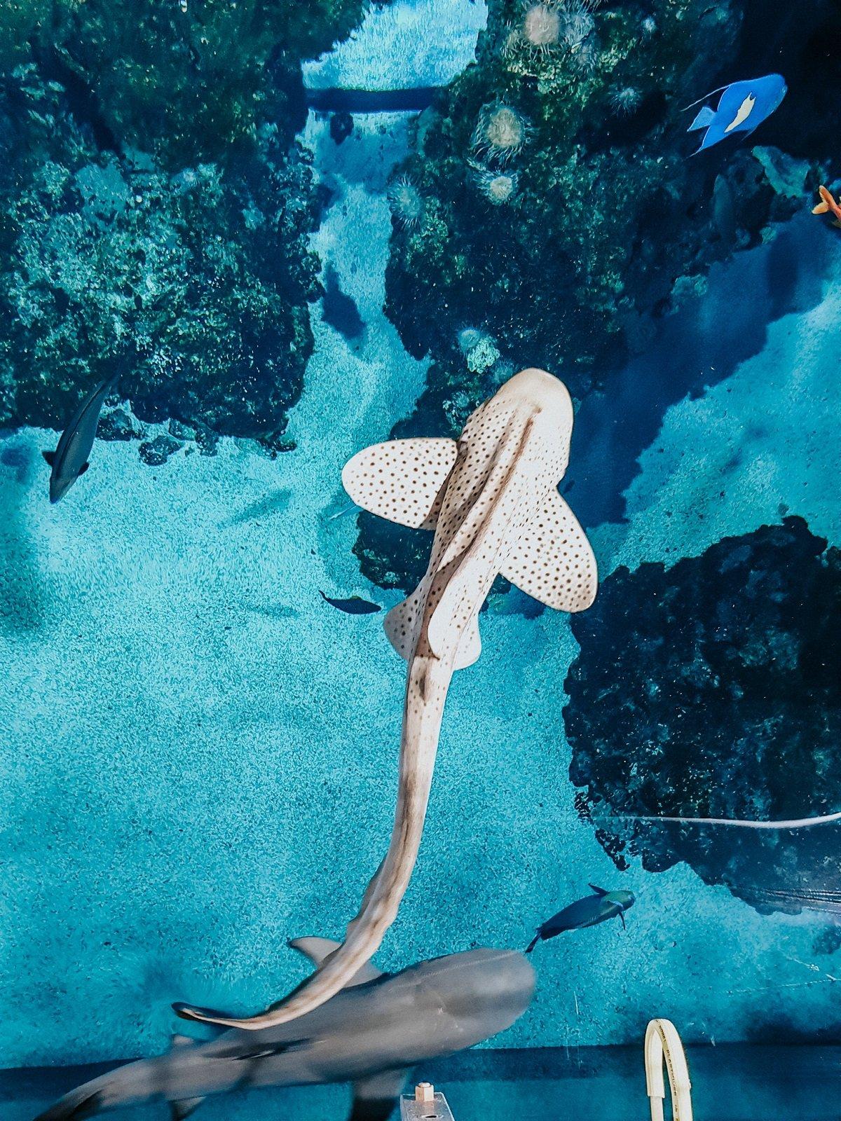J'ai assisté au nourrissage des poissons du musée océanographique de Monaco