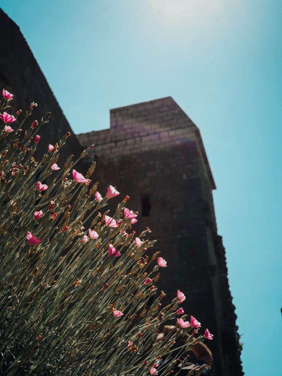 Visiter la citadelle de Quéribus dans l'Aude