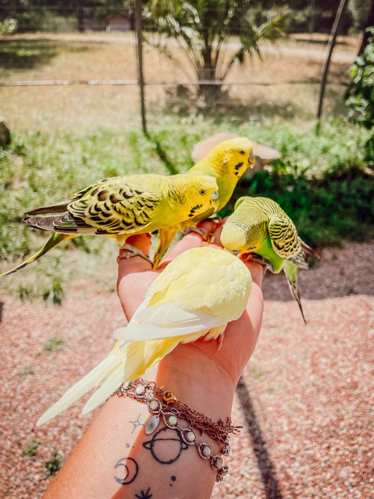 Visiter le Parc australien en famille