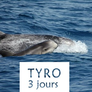 Stages TYRO