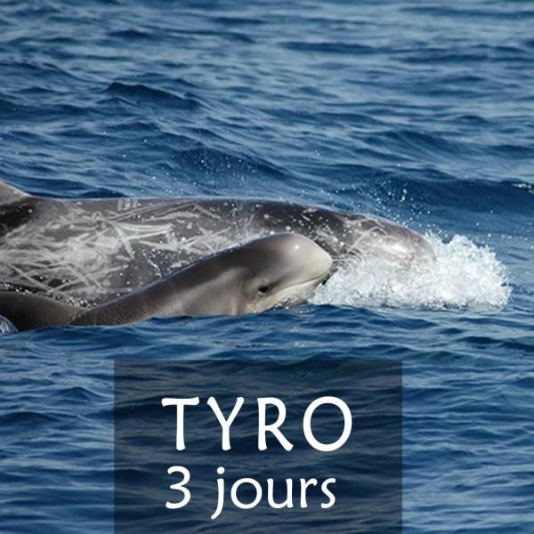 stage de 3 jours dauphins mediterrannee