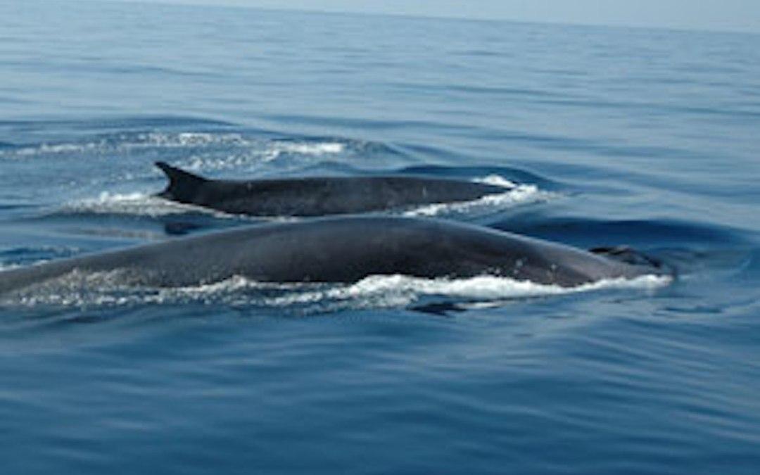 Un réveil, une baleine, du son et lumières !
